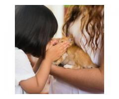 Paws for Compassion (PFC)